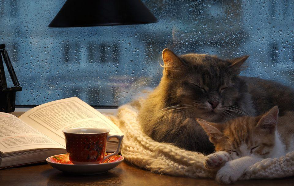 Ce citim când e urât afară? 5 cărți pentru zilele ploioase de vară