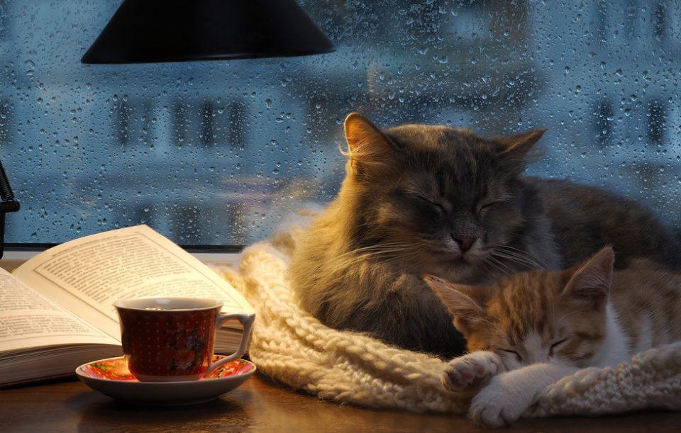 Ce să citești când ajungi acasă. 5 cărți cu pisici